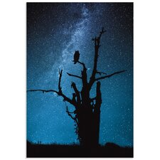 'Alone in the Dark' by Manu Allicot Photographic Print