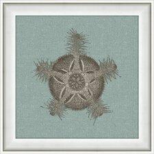 Starfish Framed Graphic Art