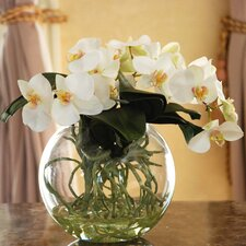 Orchid Phalaenopsis with Vase