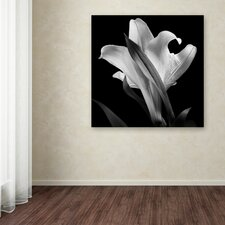 """Lily"" by Michael Harrison Photographic Print on Wrapped Canvas"