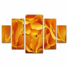"""Hypnotic Yellow Rose"" by Kurt Shaffer 5 Piece Photographic Print Set"