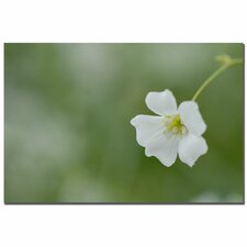 'Baby's Breath II' by Kurt Shaffer Photographic Print on Wrapped Canvas