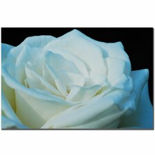 'White Rose' by Kurt Shaffer Photographic Print on Wrapped Canvas