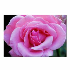 'Pink and Beautiful' by Kurt Shaffer Photographic Print on Wapped Canvas
