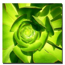 """Succulent Square Close Up"" by Amy Vangsgard Painting Print on Canvas"