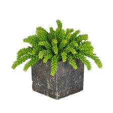 Artificial Green Sedum Succulent Desk Top Plant