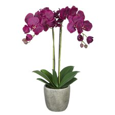 Double-Stem Orchid in Gray Stone-Look Vase