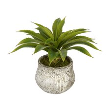 Desk Top Plant in Decorative Vase