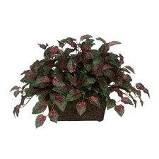 Artificial Coleus Leaf in Mini Ledge Desk Top Plant in Planter