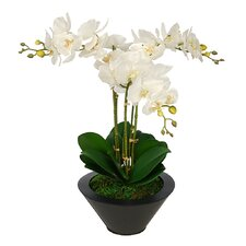 Artificial Triple Stem Orchid in Round Zinc Vase