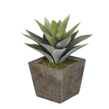 Artificial Frosted Green Succulent Desk Top Plant in Pot
