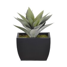 Artificial Frosted Green Succulent Desk Top Plant in Decorative Vase