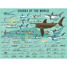 Sharks of The World by Daviz Canvas Art
