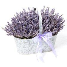 Antique Trug With Lavender