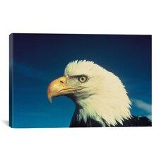 Bald Eagle Photographic Print on Canvas