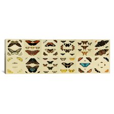'Butterflies 12 Piece Plate Collection' by Cramer and Stoll Graphic Art on Canvas