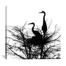 """Birds Nesting"" Canvas Wall Art by Harold Silverman"