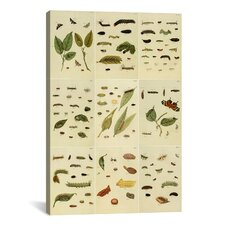 'Butterflies 9 Piece Plate Collection II' by Cramer and Stoll Graphic Art on Canvas