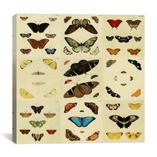 """""""Butterflies 9 Piece Plate Collection IV"""" Canvas Wall Art by Cramer and Stoll"""