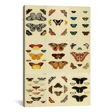 'Butterflies 9 Piece Plate Collection VI' by Cramer and Stoll Graphic Art on Canvas