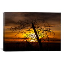 'Blowing in the Wind' by Dan Ballard Photographic Print on Canvas