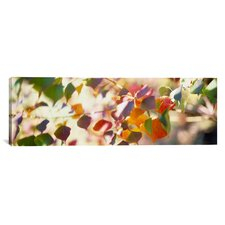 Panoramic Chinese Tallow Leaves Photographic Print on Canvas