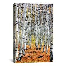 Scenic 'Autumn in Aspen' Photographic Print on Canvas