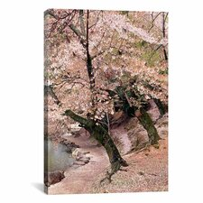 'Cherry Blossom Lane' by Monte Nagler Painting Print on Canvas