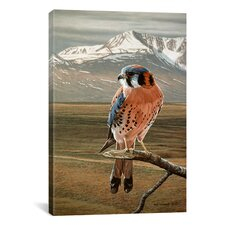'American Kestrel' by Ron Parker Painting Print on Canvas
