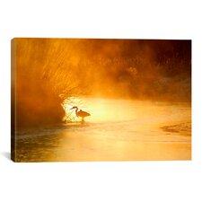 'Glowing Mist' by Dan Ballard Photographic Print on Canvas