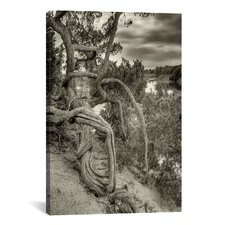 'Gorgon' by Geoffrey Ansel Agrons Photographic Print on Canvas