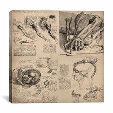 """Human Body Anatomy Collage"" Canvas Wall Art by Leonardo da Vinci"