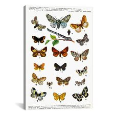 Animal European Butterflies Graphic Art on Canvas