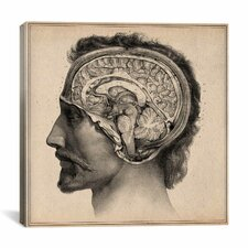 """""""Head Anatomical Drawing"""" Canvas Wall Art by Jean-Baptiste Marc Bourgery"""