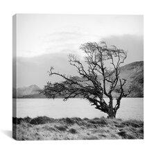 """Connemara Tree I"" Canvas Wall Art by Geoffrey Ansel Agrons"