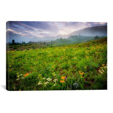 'Colorado Flowers' by Dan Ballard Photographic Print on Canvas