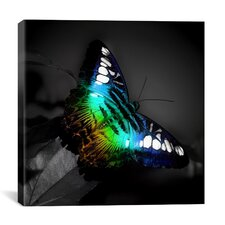 Colorful Butterfly Photographic Canvas Wall Art