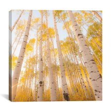 """Colorado #2"" Canvas Wall Art by Dan Ballard"