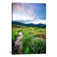 'Crested Butte Stream' by Dan Ballard Photographic Print on Canvas
