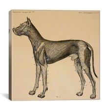 """Dog's Anatomy: Anatomy of Lymph Vessels in Dog"" by Hermann Baum Graphic Art on Canvas"