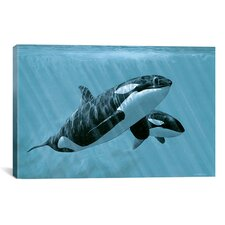 'Mother And Son - Orcas' by Ron Parker Photographic Print on Canvas