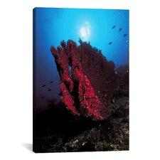 Marine and Ocean Coral Photographic Print on Canvas in Pink