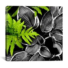 """""""Leaves over Leaves"""" Canvas Wall Art by Harold Silverman - Foilage and Greenery"""