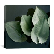 """""""Lilies in a Grouping"""" Canvas Wall Art by Harold Silverman - Foilage and Greenery"""