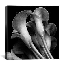 """Lillies"" Canvas Wall Art by Michael Harrison"
