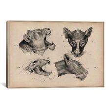 Animals 'Lion Head Anatomy' by Wilhelm Ellenberger and Hermann Baum Graphic Art on Canvas