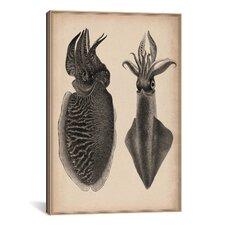 Animal Octopus Squid Scientific Drawing Graphic Art on Canvas