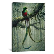 Resplendent Quetzal 2 by Harro Maass Graphic Art on Canvas