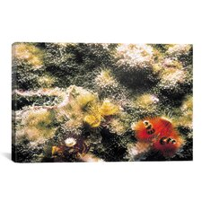 Marine and Ocean 'Spiral Coral #2' Photographic Print on Canvas