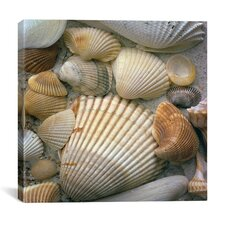 """Sea Shells"" by J.D. McFarlan Photographic Print on Canvas"
